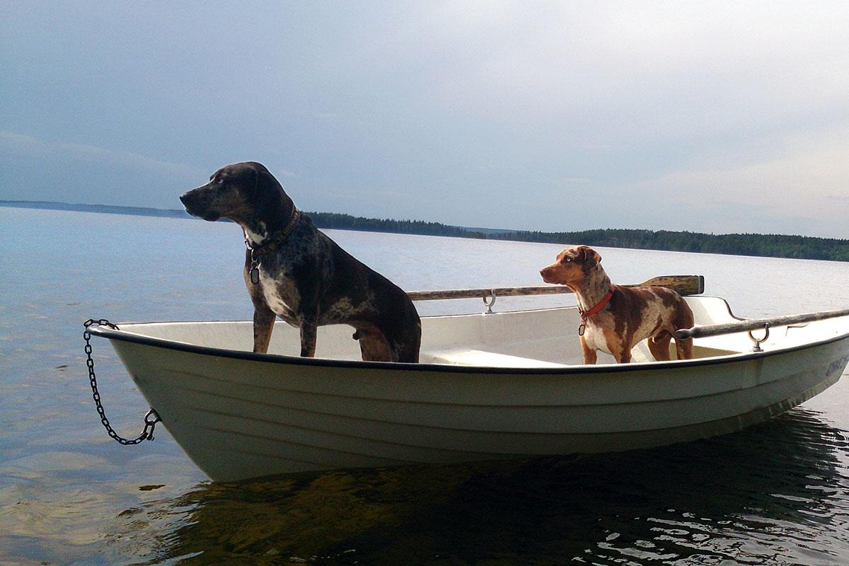 honden varen